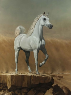 Young Arabian Stallion